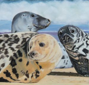 3 Grey Seals Horsey Norfolk