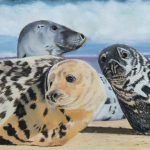 3 Grey Seals On Horsey Beach