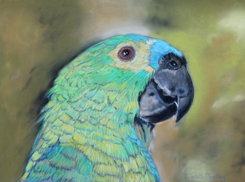 Blue-Fronted-Amazon-Macaw