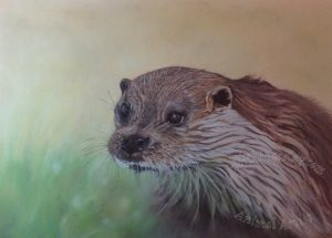 British-Otter