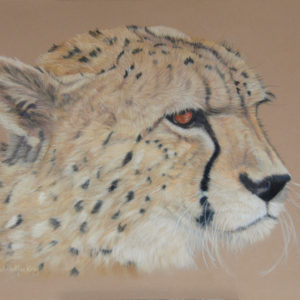 Contemplation – Cheetah Giclee Print