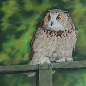 European Eagle Owl – Where are You?