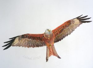 Flying-High-Red-Kite