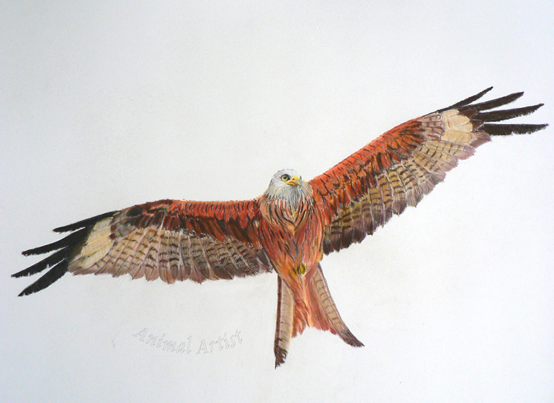 Flying High Red Kite