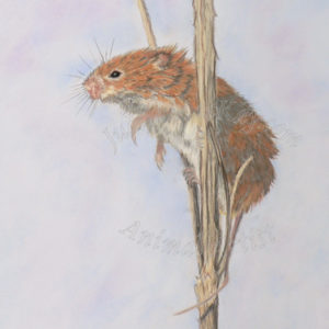 On The Look Out – Harvest Mouse – Giclee Print