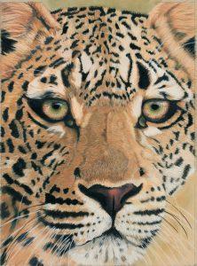 Ingwe the Leopard