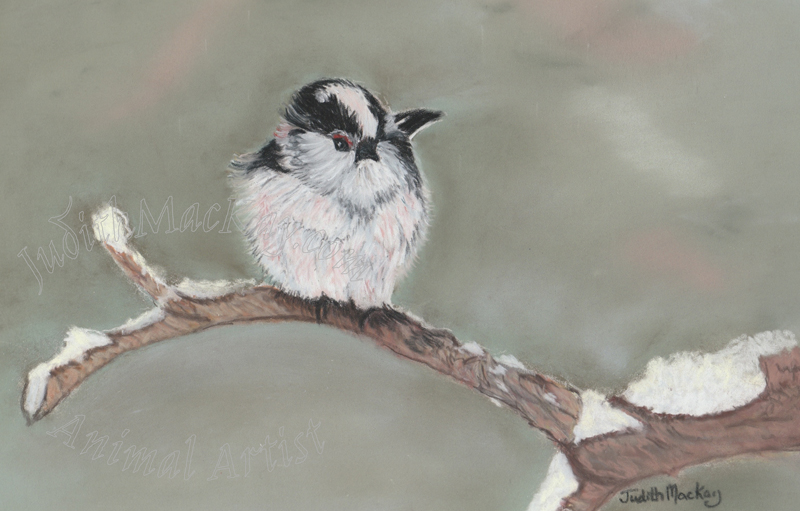 Longtailed-Tit