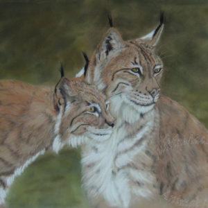 Petra – Lynx