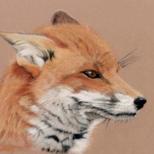 Mr Fox – Greetings Card