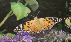 Painted-Lady-pastel-hi-res-copy