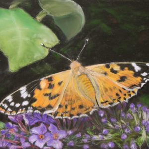 Painted Lady Butterfly – Giclee Print