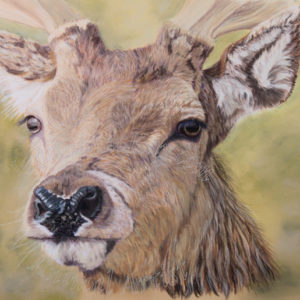 The Red Stag – Giclee Print