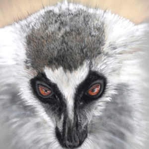 Mischief – Ring Tailed Lemur – Giclee Print