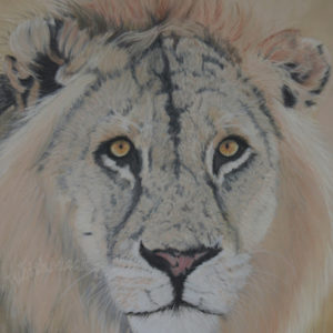 Surprise – Serengeti Lion