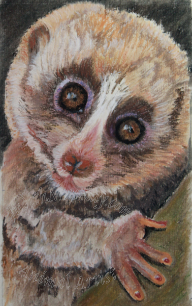Slow-Loris-I-am-not-your-toy-Lucie-Cizmarova