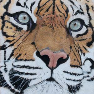 Sumatran Tiger – Giclée Print
