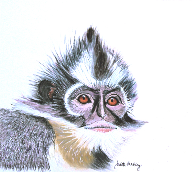 The-Thomas-Leaf-Monkey