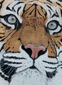 Sumatran Tiger – Greetings Card