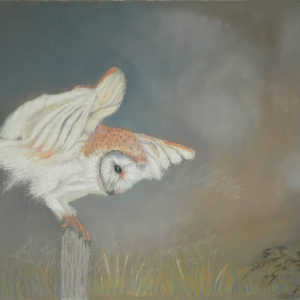 About to Pounce – Barn Owl – Greetings Card