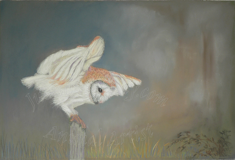 Barn Owl About To Pounce