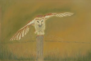 Barn Owl Just Landed