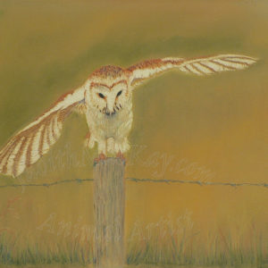 Barn Owl – Just Landed