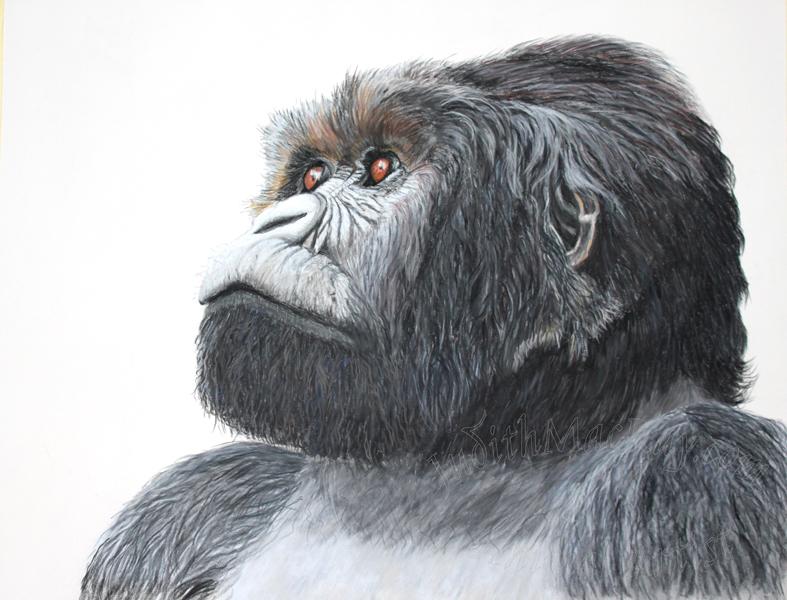 Magumu Silverback Mountain Gorilla
