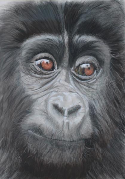 Mischief Baby Gorilla SOLD