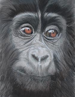 Mischief - Young Mountain Gorilla