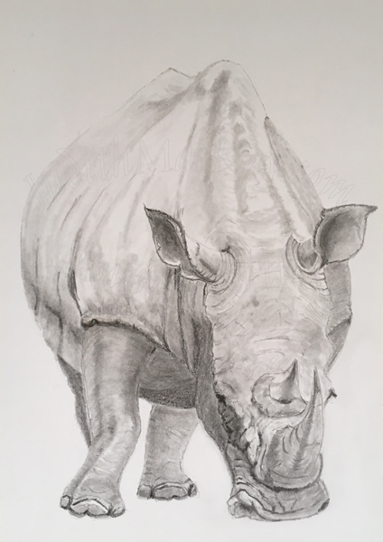 Southern White Rhino SOLD