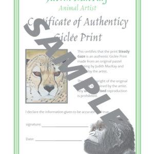 Steady Gaze – Female Cheetah – Giclée Print
