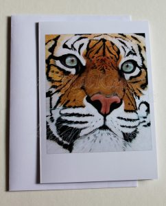 Sumatran-Tiger(card)