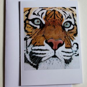 Sumatran Tiger – Greetings Card