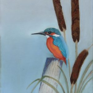 Kingfisher and Bullrushes