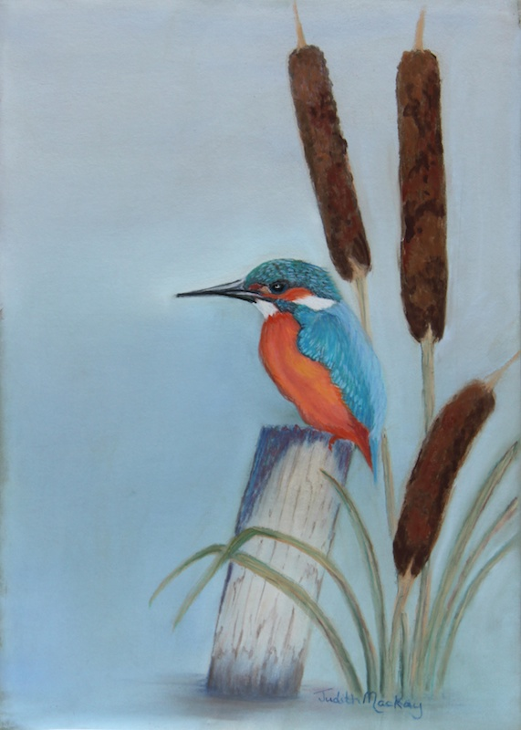 Bullrushes Kingfisher