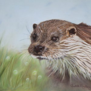 British Otter SOLD
