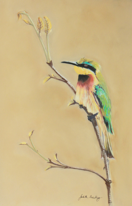 Little Bee Eater