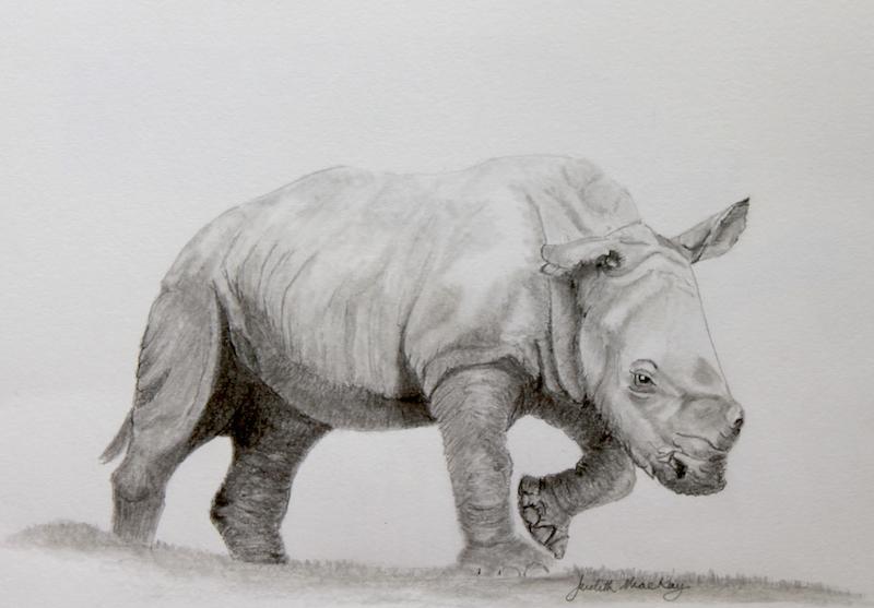 Ian Southern White Rhino Calf